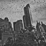 Flying-Central-Park-2015-©-Paolo-Goltara