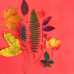 amy_chen_leaves