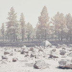 rieser_adc-4